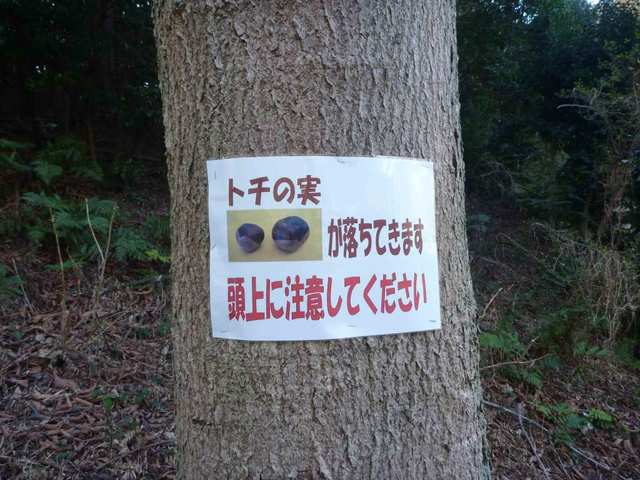 miyazawa_tochinomi(1)