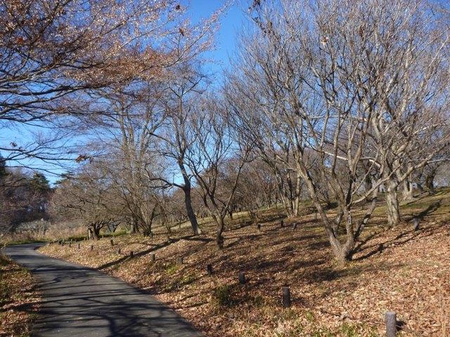 森林公園 花木園(1)