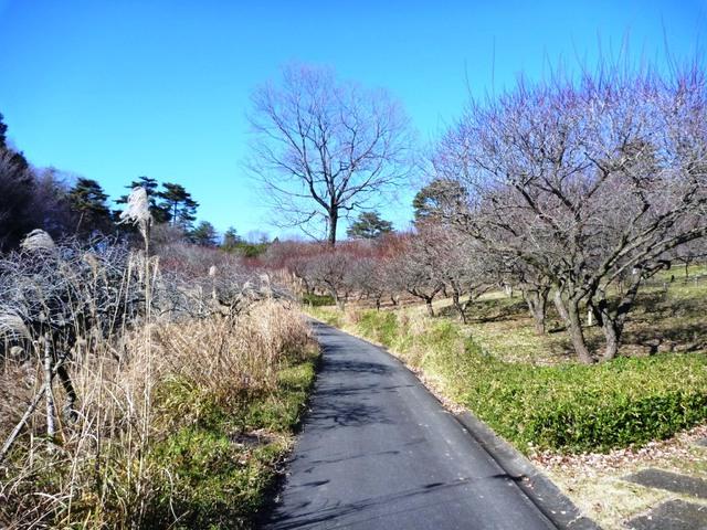 森林公園 花木園(2)