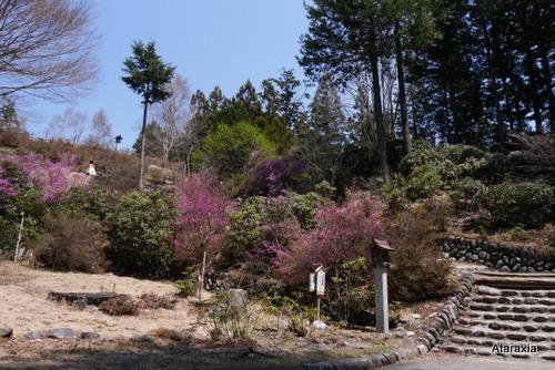mitsumine_shrine (30)