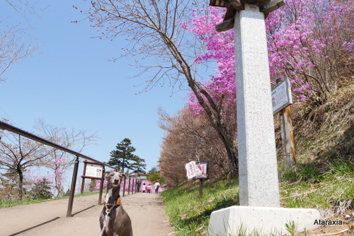 mitsumine_shrine (4)