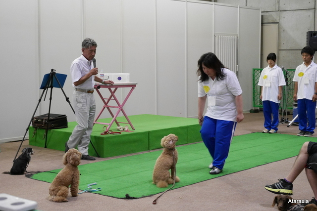 interpets2014_ataraxia (11)